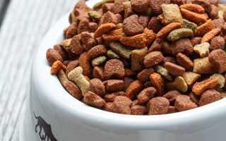 Можно ли кормить собаку кошачьим кормом и что будет, если давать его постоянно