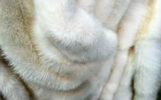 Как почистить белый мех в домашних условиях от желтизны: уход за одеждой из песца