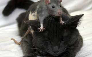 Год Крысы – что готовить на стол: рекомендуемое меню