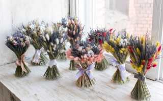 Как сушить цветы и листья для гербария в домашних условиях