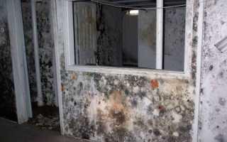 Как избавиться от запаха сырости и плесени в квартире и предотвратить повторное появление?